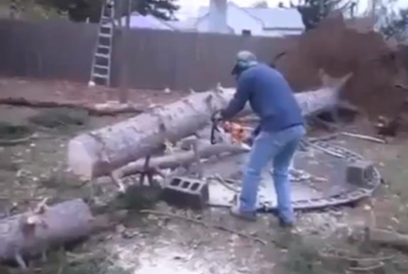 arbre qui ne voulait pas mourir