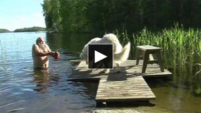 bain grand chien Pyrénées