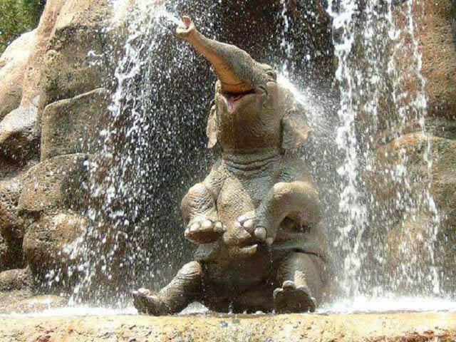 Des éléphants et des pneus